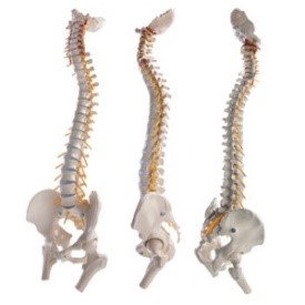 out of alignment can cause back pain