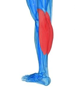 calf cramps remedy muscle cramps