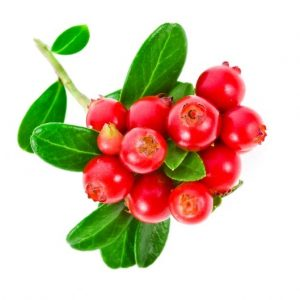 the supplement industry cranberry